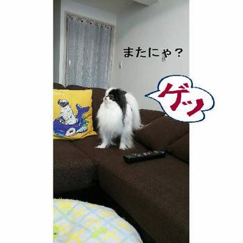 げっ.JPG