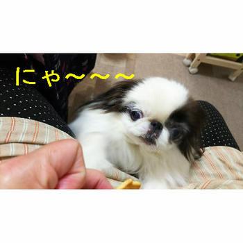 にゃ3.JPG