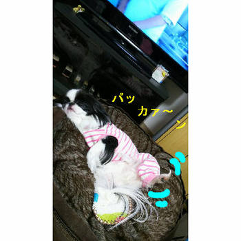 ぱっか~ん.JPG