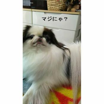 まじ?.JPG