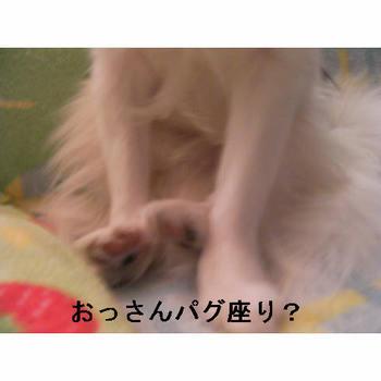 パグ座り.JPG