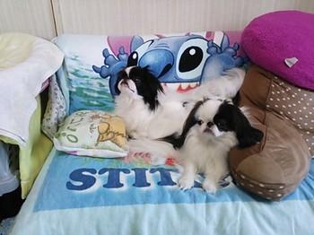 枕.JPG