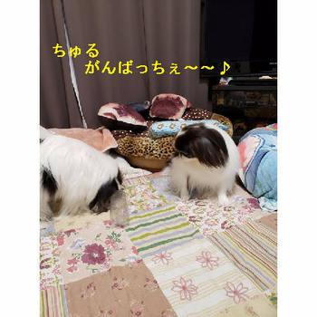 がんばれ.JPG