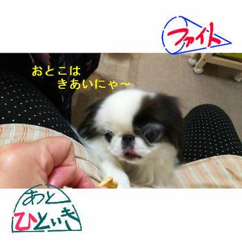 きあい4.JPG