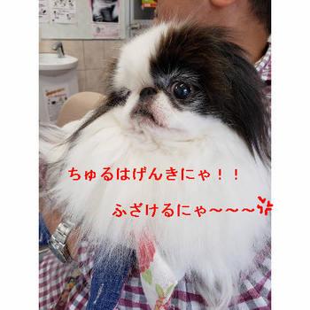げんき.JPG
