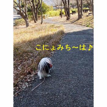 この道は.JPG