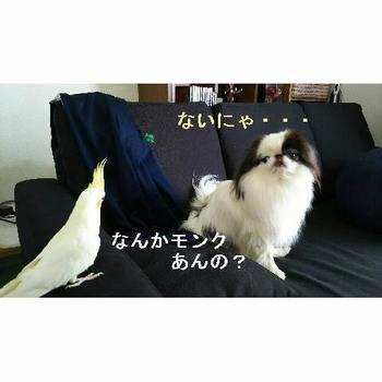 もんくあんの?.JPG