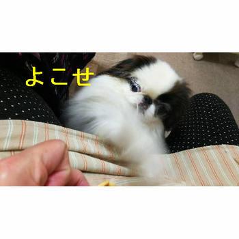 よこせ2.JPG
